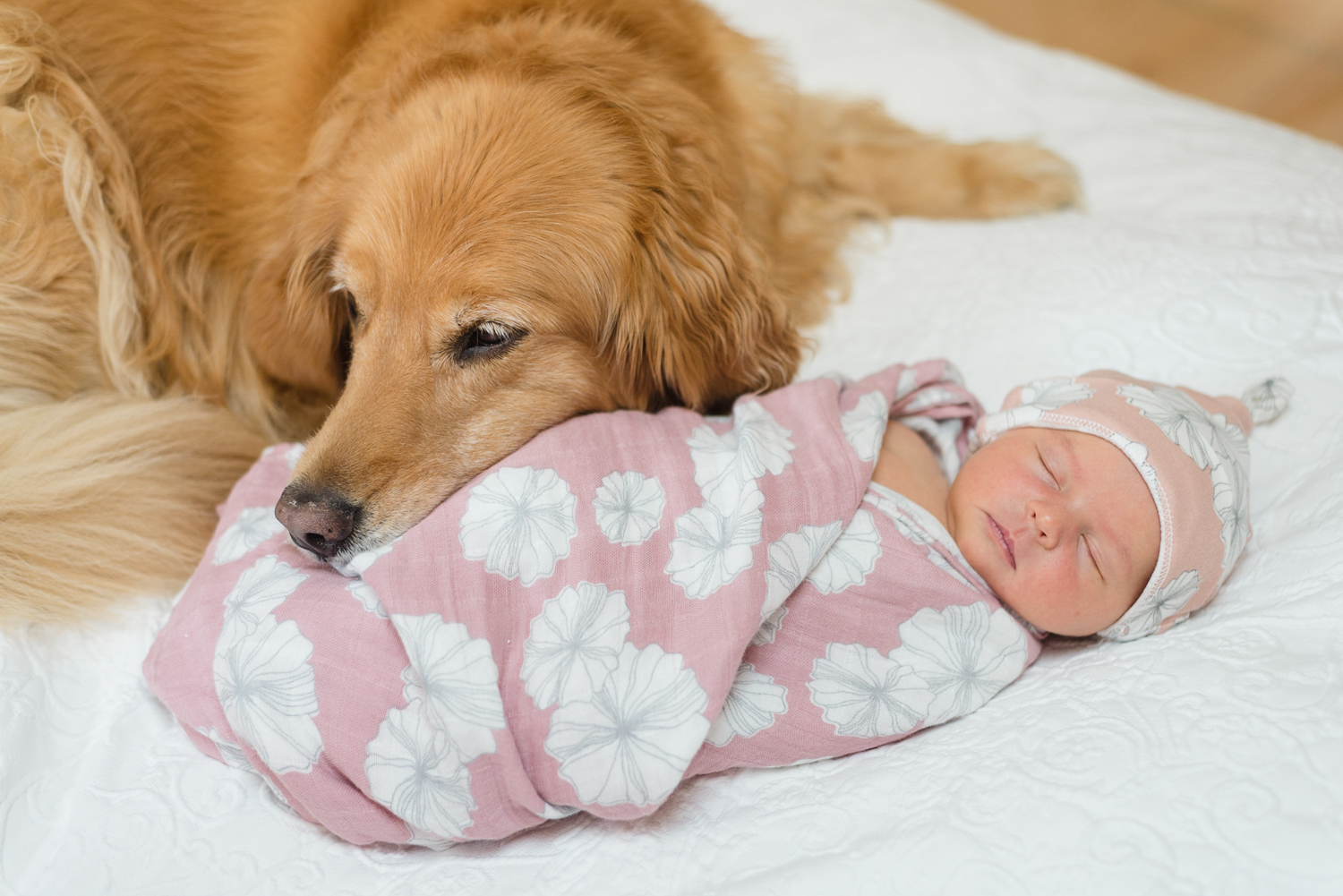 Dog snuggles baby for newborn portrait | Pets In Human Photo Session