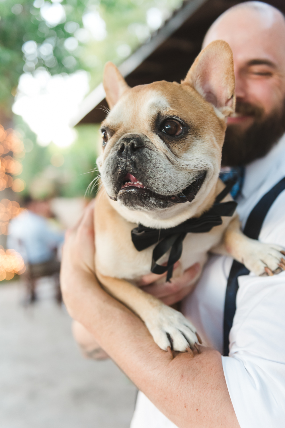 Groom holds French Bulldog wearing a bowtie | Pets In Human Photo Session