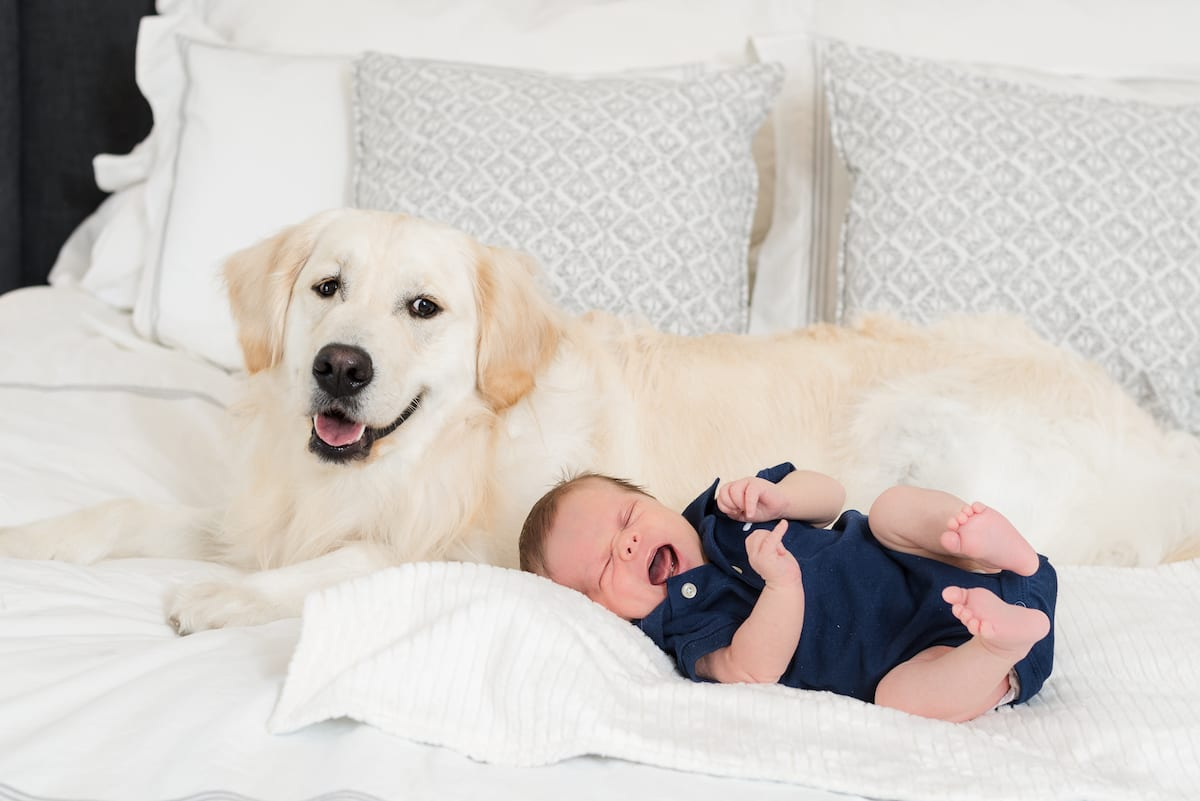 Newborn portrait with dog | Pets In Human Photo Session