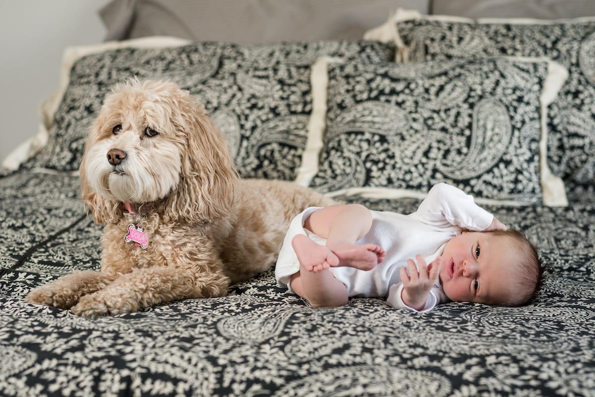 Dog with newborn human