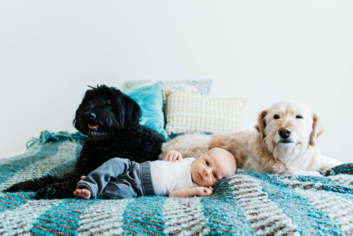 Colorado newborn and maternity photography