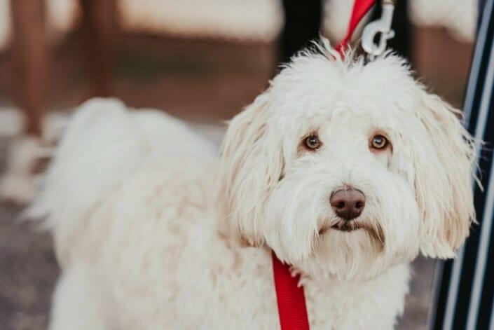 Wedding Dog | Denver Colorado Elopement Photographer